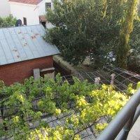 Аренда в Будве новой просторной 3-х комн. квартиры в частном доме с 2-мя террасами у дома Солнца (Душка)